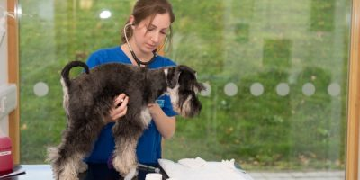 The Year Estimation of Becoming a Veterinarian Assistant